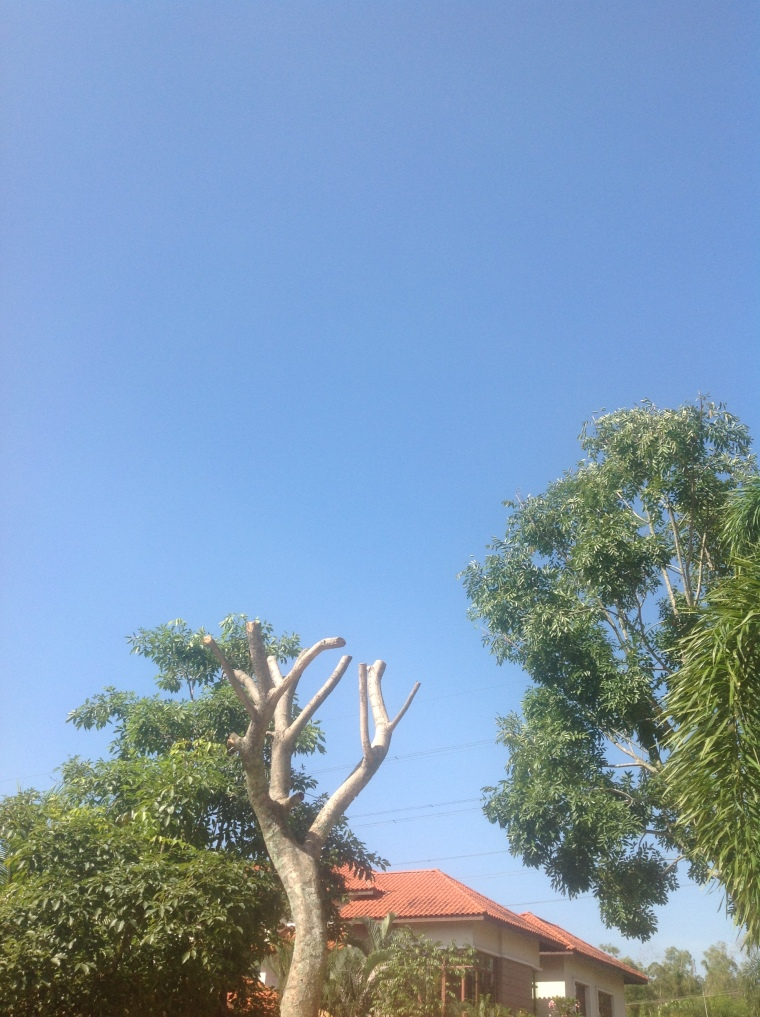 A rare sight in KL, a cloudless sky (no filter). The dead tree is probably less rare!
